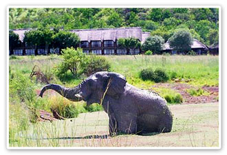 Elephant Bakubung Bush Lodge Malaria Free Big Five Pilanesberg Game Reserve Accommodation Booking