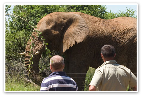 Pilanesberg Game Reserve Elephant Sighting Buffalo Thorn Lodge Malaria Free Big Five Accommodation Booking