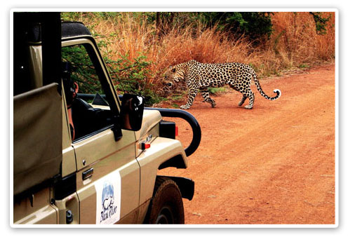 Leopard Pilanesberg Reservations Pilanesberg Game Reserve Accommodation Booking
